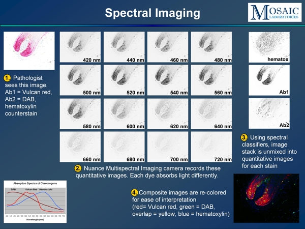 Multispectral Analysis Images Multispectral Imaging Provides